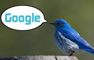 Google-ски Индустриален Шпионаж: Имат къртица в Туитър!